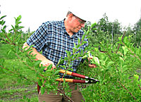 Tom Whitlow pruning