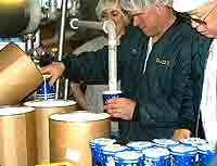 Cornell Dairy Plant runs a test batch of 'Beach Plum Comfort' ice cream.  Click for larger image.